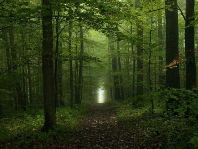 Beautiful_forests_09